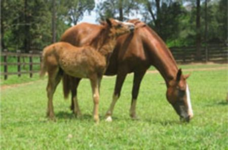 Curso de Manejo Reprodutivo em Equinos