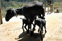 Curso de Manejo Reprodutivo em Ovinos