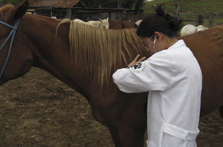 Curso de Primeiros Socorros em Equinos