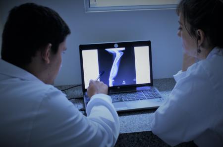 Curso de Radiologia em Pequenos Animais - Interpretação Radiográfica
