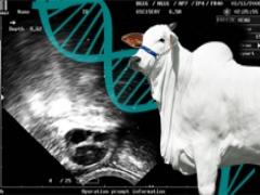 Curso de Seleção de Doadoras de Embriões e Ovócitos  Bovinos