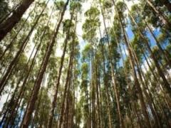 Curso sobre o Uso da Madeira de Eucalipto: Todas as Oportunidades Envolvidas