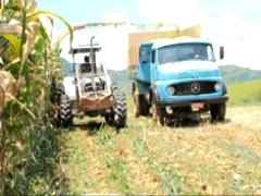 Curso sobre Produção de Volumoso: Silagem de Milho, Capim e Cana