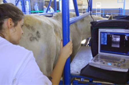 Cursos de Ultrassonografia e Palpação Retal em Equinos