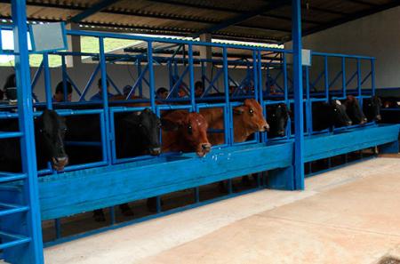 Pós-Graduação em Reprodução e Produção de Bovinos