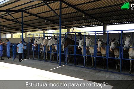 Pós-Graduação em Reprodução em Equinos