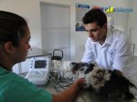 1º Curso de Cardiologia em Pequenos Animais 08-09-2011