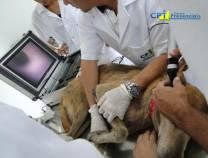 1º Curso de Dermatologia em Cães e Gatos 15-02-2011