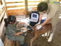 1º Curso de Ultrassonografia em Ovinos 25/01/2011