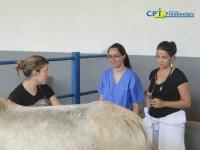 10º Curso de Anestesia em Equinos a Campo 19-01-2012