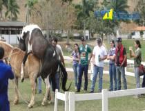 10º Curso de Manejo Reprodutivo em Equinos 23-09-2014