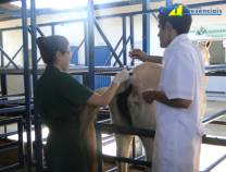 11º Curso de Anestesia em Equinos a Campo 02-06-2012
