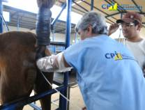 11º Curso de Inseminação Artificial em Éguas 27-05-2012