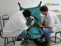 11º Curso de Transferência de Embriões em Ovinos e Inseminação por Laparoscopia em Ovinos 16-10-2011