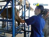 12º Curso de Transferência de Embriões em Ovinos e Inseminação por Laparoscopia em Ovinos 28-01-2012