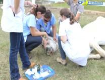 12º - Curso de Anestesia em Equinos a Campo - 27-08-2012