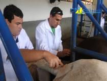 14º - Curso de Anestesia em Equinos a Campo - 04-05-2013
