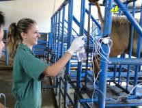 14º Curso de Transferência de Embriões em Ovinos  15-07-2012
