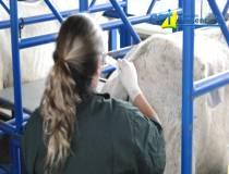 15º - Curso de Anestesia em Equinos a Campo - 25-09-2013