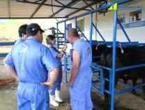 16º Curso de Primeiros Socorros em Bovinos  06-06-2012