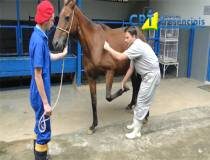 17º Curso de Diagnóstico de Claudicação em Equinos - 17/01/2014