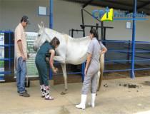 18º  Curso de Diagnóstico de Claudicação em Equinos 21/03/2014