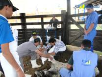18º - Curso de Primeiros Socorros em Bovinos  22-09-2012
