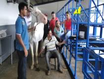 19º Curso de Diagnóstico de Claudicação em Equinos 23-01-15