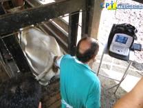 19º Curso de Ultrassonografia na Reprodução Bovina 26-02-2011