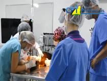 1º Curso de Anestesia Locorregional em Pequenos Animais - 17/03/2014