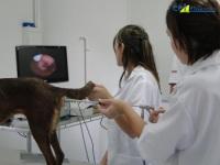 2º Curso de Inseminação Artificial em Pequenos Animais 14/01/2011