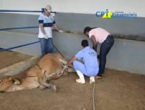 21º - Curso de Primeiros Socorros em Bovinos -  17-04-2013