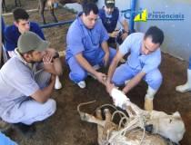 22º - Curso de Primeiros Socorros em Bovinos - 04-07-2013