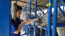 28º Curso de Primeiros Socorros em Equinos - 11-06-2015