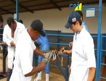 29º Curso de Casqueamento Preventivo e Correção de Aprumos em Bovinos 17-04-2015
