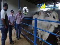 2º Curso de Avaliação Fenotípica de Bovinos de Corte (zebu) para Compra e Seleção - 18/01/2014