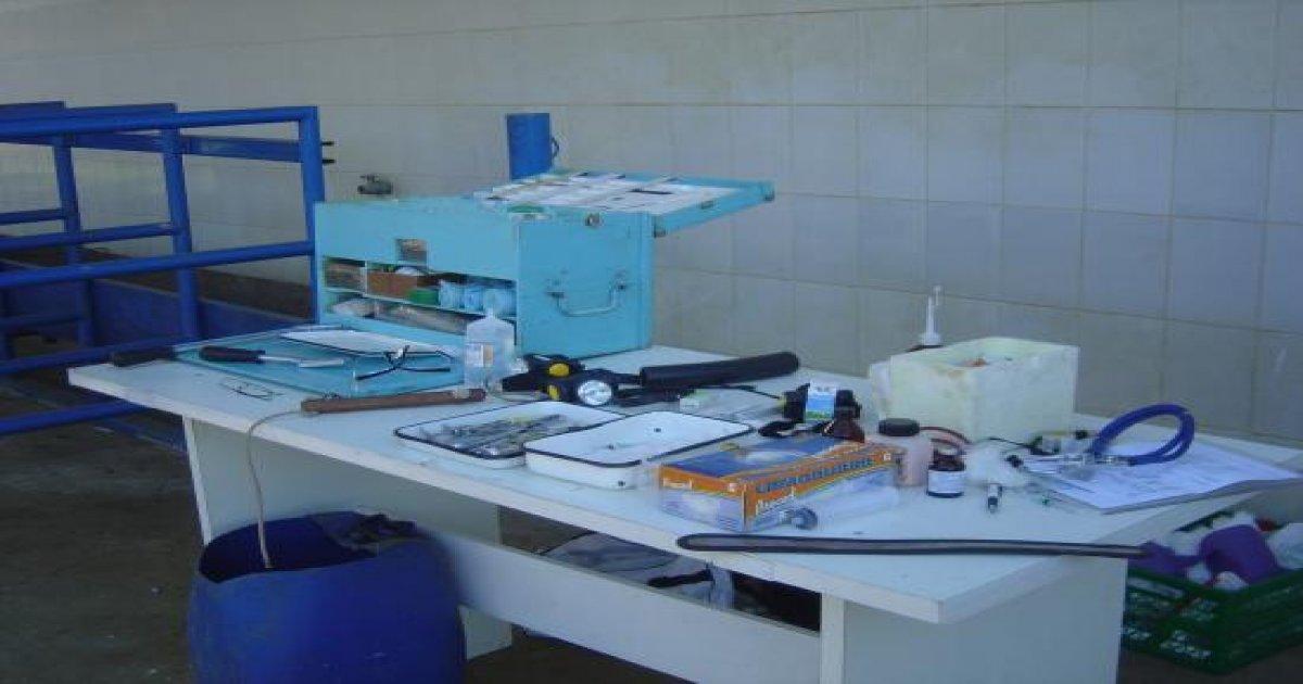 2º Curso de Odontologia Equina - 29/07/2008
