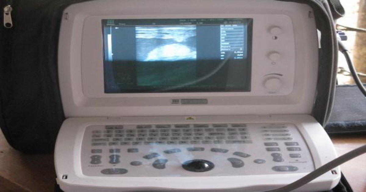 2º Curso de Ultrassonografia na Reprodução Bovina - Outubro de 2008