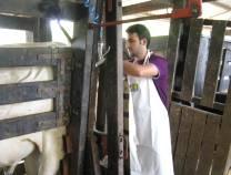 3º Exame Andrológico e Congelamento de Sêmen Bovino - Março 2009