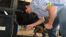 30º Curso de Casqueamento Preventivo e Correção de Aprumos em Bovinos - 05-06-2015