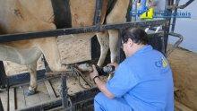 31º Curso de Casqueamento Preventivo e Correção de Aprumos em Bovinos 24-07-2015