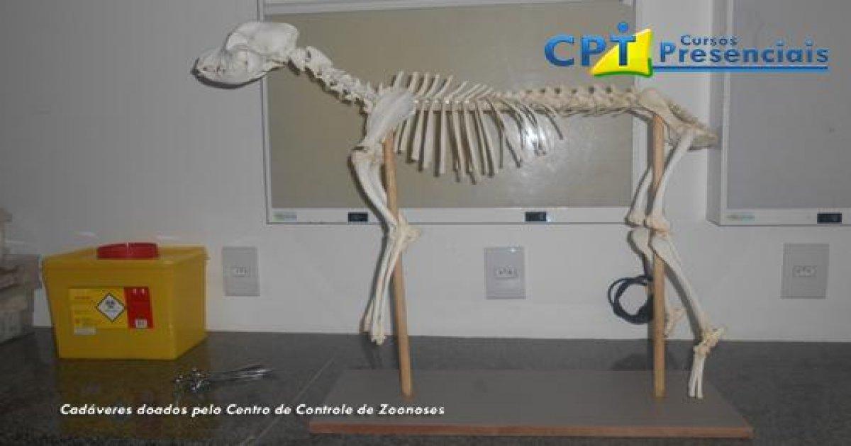 32º Curso de Cirurgias em Pequenos Animais 12-04-2016