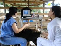 3º Curso de Ultrassonografia em Ovinos 14-10-2011
