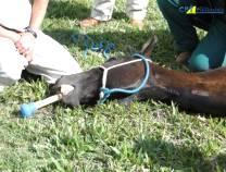 4º Curso de Anestesia em Equinos a Campo - 12/07/2010