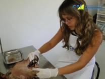4º Curso de Odontologia em Pequenos Animais 06/02/2011