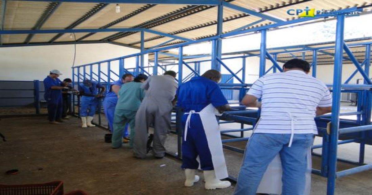 4º Curso de Casqueamento Preventivo e Correção de Aprumos em Bovinos 25/01/2011
