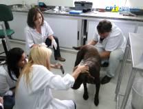 4º Inseminação Artificial em Pequenos Animais  17-07-2012