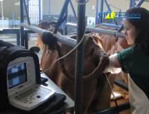 52º - Curso de Ultrassonografia na Reprodução Bovina - 03-05-2013
