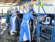 53º - Curso de Ultrassonografia na Reprodução Bovina - 18-06-2013