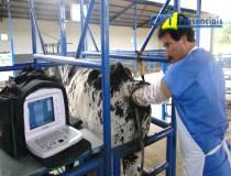 58º Curso de Ultrassonografia na Reprodução Bovina - 30-10-2013